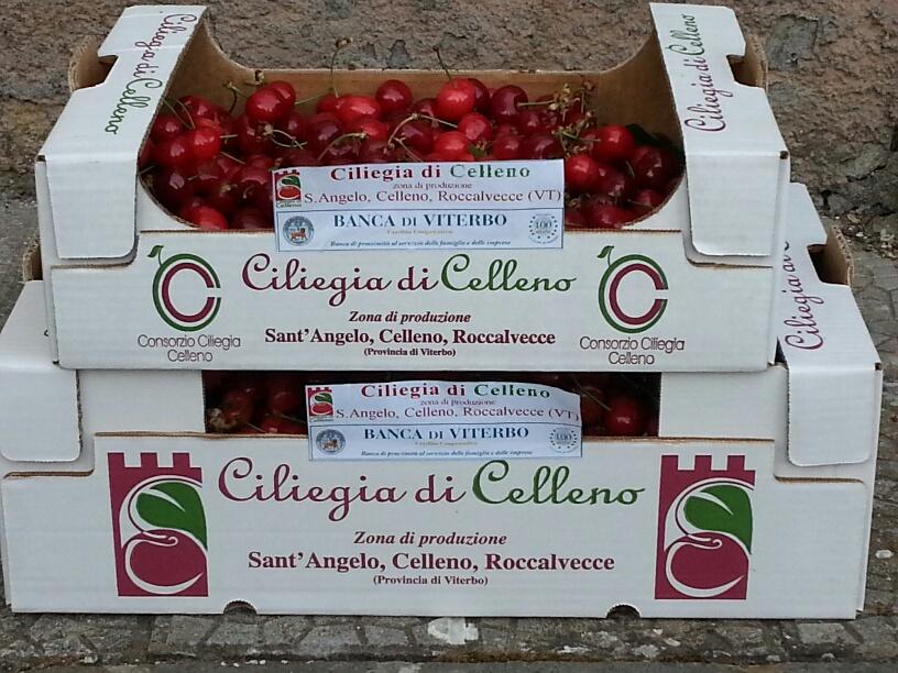 ciliegie-celleno-cassetta